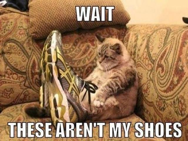 catshoes