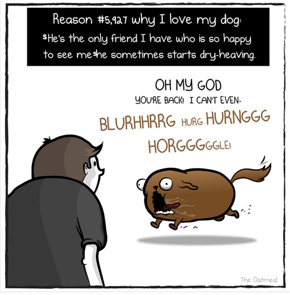 oatmeal dog