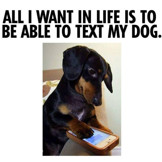 textmydog
